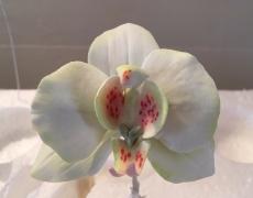 IMG_2052 White Orchid.JPG