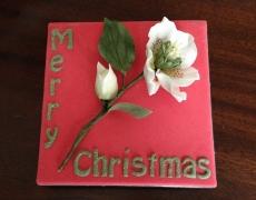christmas-rose-1