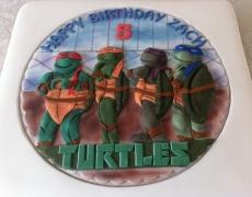 turtle-closeup-2